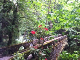 Whatcom Falls Bridge 2013